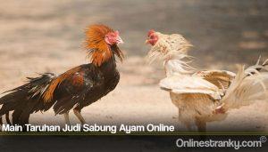 Main Taruhan Judi Sabung Ayam Online