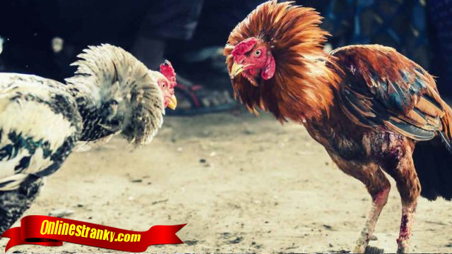Fakta Jurus Bongkar Ayam Bangkok